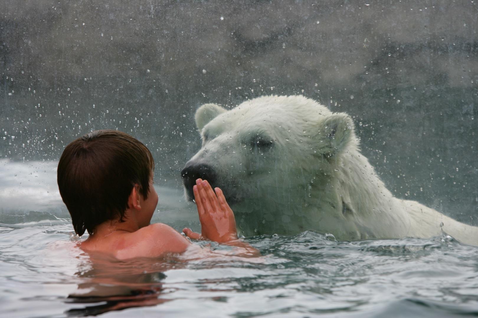 با یک خرس قطبی شنا کنید