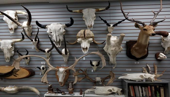 The Skull Store