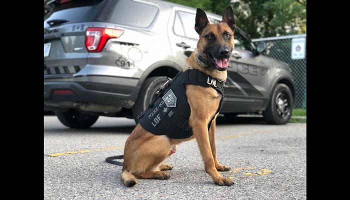 سگ پلیس تورنتو ۴ سارق مرکز خرید یورک دیل را شناسایی کرد