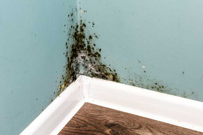 وقتی دیوارهای خانه کپک دارد چکار کنیم؟ آیا خطرناک است یا اهمیتی ندارد؟