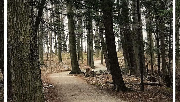 پارکی با ۵ مسیر پیادهگردی