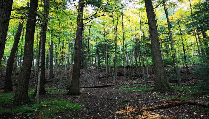پارکی با درختان چند صد ساله