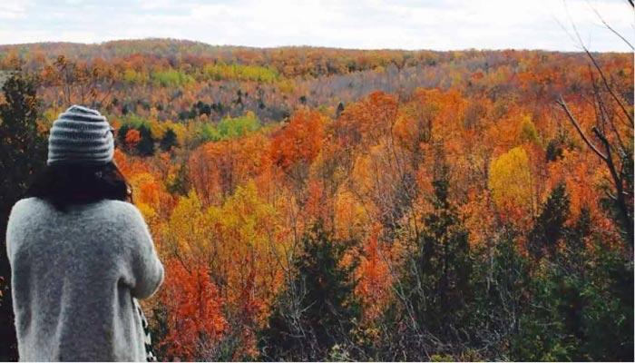 Sager Conservation Area؛ یک مسیر جنگلی و برجی 30 فوتی برای تماشای مناظر
