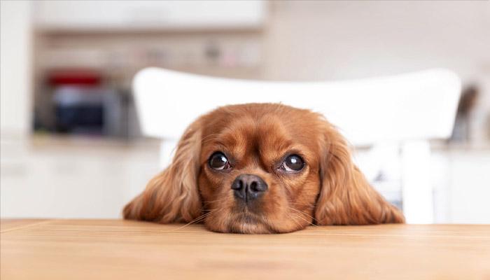 Photo of ۱۰ نام اول مورد علاقه کانادائیها برای حیوانات خانگی خود در سال ۲۰۲۰