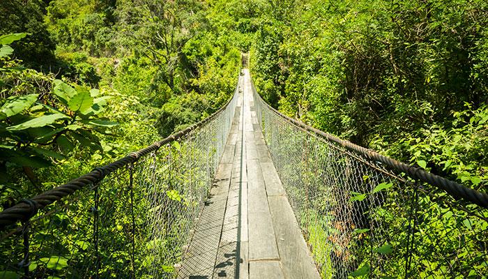 تور یک روزه در جنگل انتاریو که شما را از طولانیترین پل چوبی معلق دنیا عبور میدهد